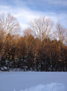 This was taken with my iPhone4s. I also took this after the storm of Nemo. It is at my elementary school facing towards the woods and down the hill. I did not edit this picture